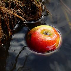 topaz-mcnumpty on flickr