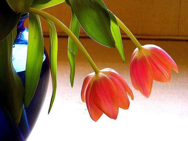calliope on flickr