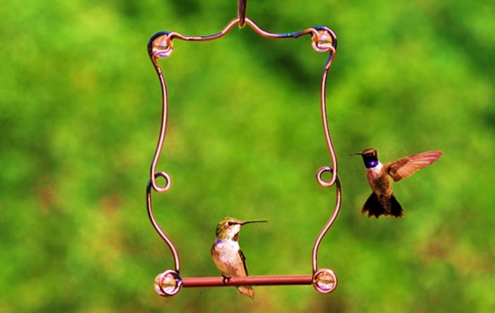 birdfeeders-dot-com-image